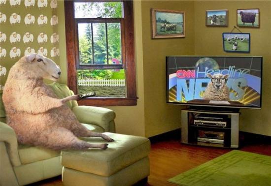 Naród owiec ogląda promowane przez lewicę wiadomości.