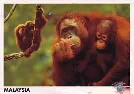malaysia-postcard