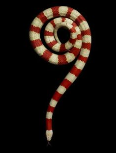 snake-question